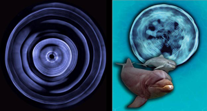 Dolphin soundwaves