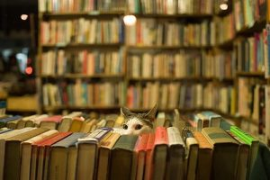 Why Do Independent Bookstores Have Cats?
