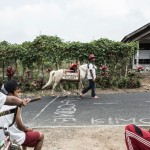 This Horse delivers books to remote Indonesian villages