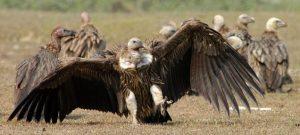 Industry Experts Accuse Kobo of Being Predatory Vultures