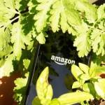 Amazon Experiences a $170 Million Loss on Fire Phone