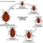 eBooks Don't Have Bedbugs – Library Books Do