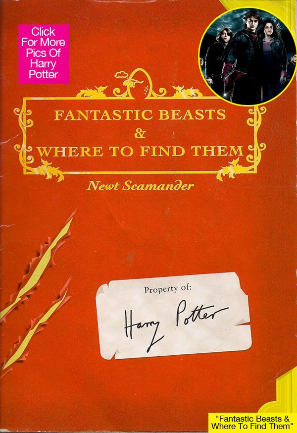 fantastic-beasts-where-to-find-them-harry-potter-lead